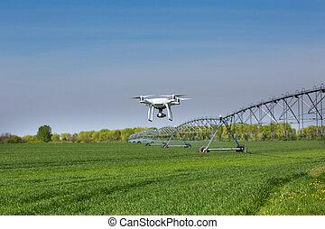 campo, vuelo, trigo, sobre, zángano