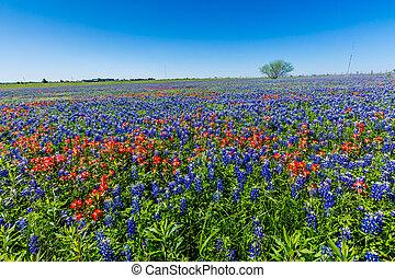 campo, wildflowers., lleno, tejas