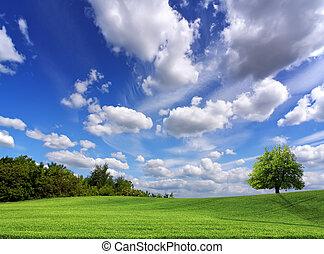 campo, y, el, hermoso, cielo azul