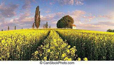 campos, amarillo, ocaso, violación, paisaje, capilla