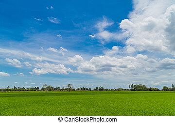 campos arroz, sob, um, nublado, céu azul