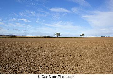 campos, cultivado