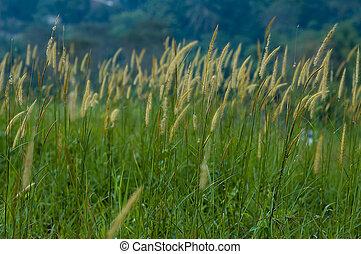 campos, de, pradera