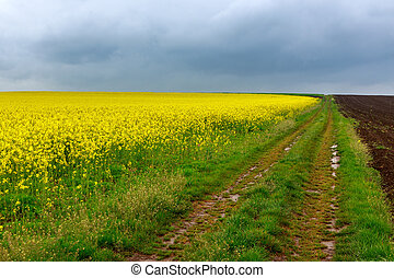 campos, estrada,  Canola, sujeira