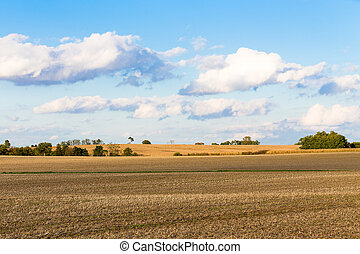 campos, maíz, monoculture, indiana