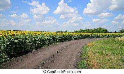 campos, margens, rússia, girassol, estrada
