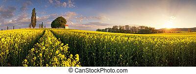 campos, ocaso, violación, amarillo, capilla