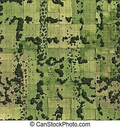 campos, pájaro, pradera, vista