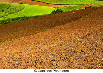 campos, ploughed