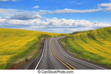 campos, por, rapeseed, camino