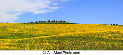 campos, rapeseed, panorama