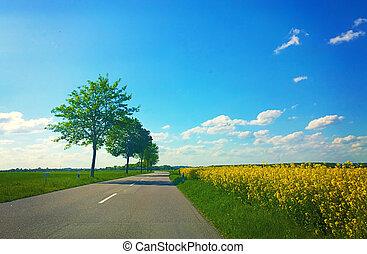 campos, rural, bavaria, estrada rural, amarela, canola