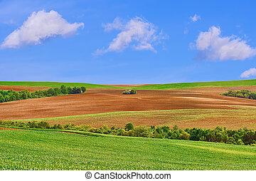 campos, sob, céu