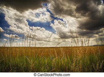 campos, sob, céu nublado