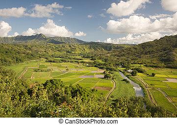 campos, valle de hanalei, taro