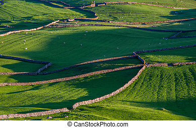 campos, valles, stonewalled, yorkshire