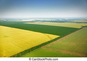 campos, vista, aéreo, colza, aldea
