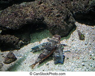 camuflage fish -