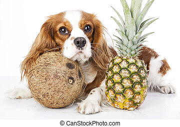 Can dogs eat fruit illustration. Tropical fruit and cavalier king charles spaniel dog. Dog with fruit food. Dog health care.