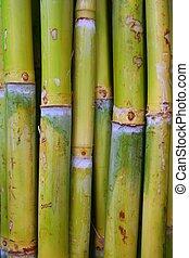 cana, alimento, açúcar, troncos, verde, bambu