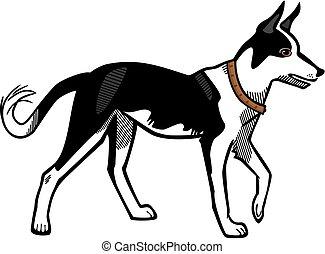 canaan, chien