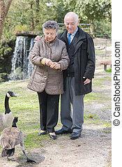 canadá, alimentação, aposentado par, parque, gooses