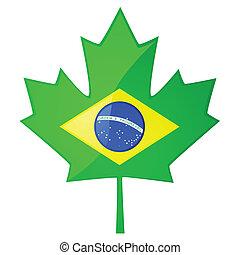 canadá, brasileiro