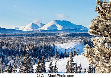 canadá, inverno, neve, taiga, território, paisagem, yukon