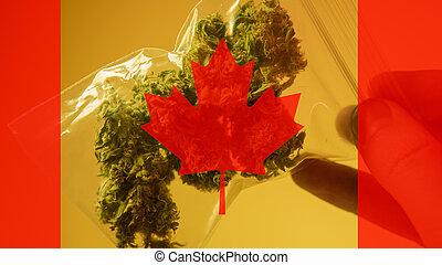canadá, médico, legalization, 2019, marijuana