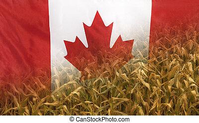 canadá, nutrição, conceito, tecido, campo milho, bandeira