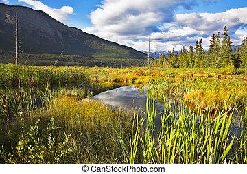 canadá, otoño, maduro, norteño, reserva