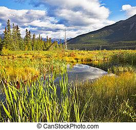 canadá, otoño, multa, norteño, reserva