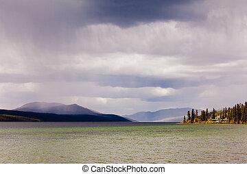 canadá, raposa, lago, chova banho chuveiro, território, yukon