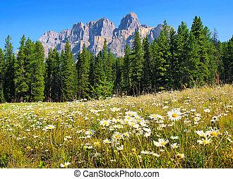 canadá, verão, paisagem, alberta