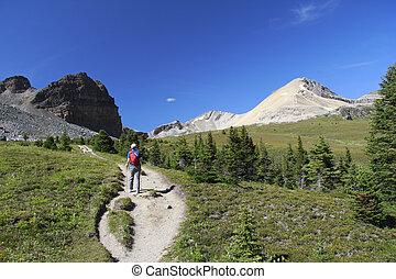 canada, Camminare, traccia, segno, scia, nazionale,  -, parco, diaspro, Alpino
