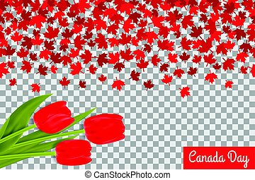 Canada day background with maple leafs and tulips for 1st of...