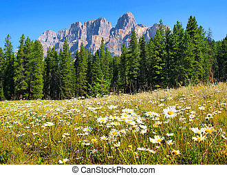 canada, estate, paesaggio, alberta