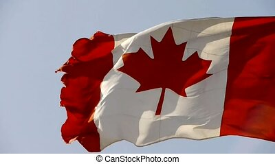Canada flag is fluttering in wind.