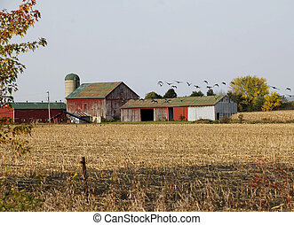 Canada geese flying over a old barn