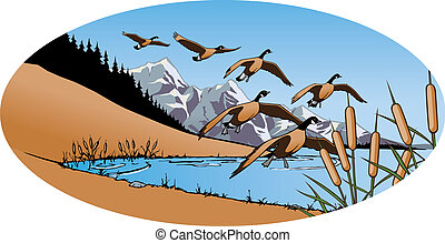 Canada Geese - Layered Vector file. Each Goose, Lake, Sky,...