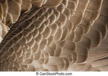 Canada Goose feather
