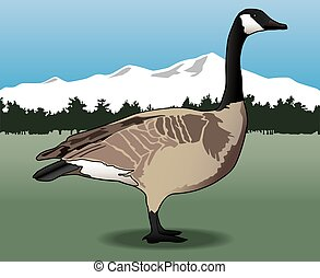 Canada Goose - Lone Canada Goose is standing in the wild