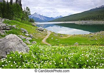 canada, montagna, nazionale, lago, parco, diaspro