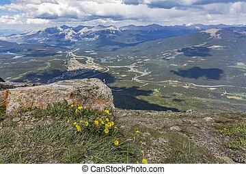 canada, montagna,  np, cima,  -,  wildflowers, diaspro, azzurramento