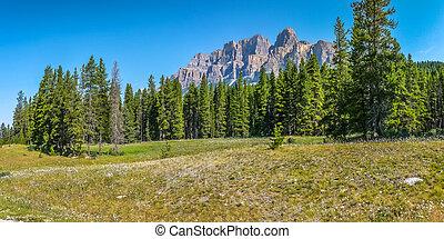 canada, montagne, roccioso, fiori,  Alberta, paesaggio