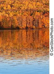 canada, nieuwe brunswick, bomen, herfst