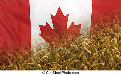 Canada Nutrition Concept Corn field with fabric Flag -...