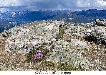 canada, prato, nazionale,  -, parco, diaspro, tempesta, Alpino, Avvicinare