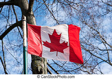 canada's, bandeira, vento