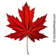 Canadian cannabis decriminalization and marijuana legalization in Canada as a maple red leaf with a weed symbol inside as a recreational drug or medical herbal medicine as a new law in a 3D illustration style isolated on white.